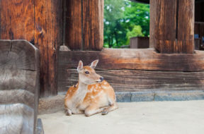 zoo dusit bangkok