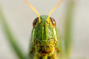 Mariposario e insectario en Bangkok